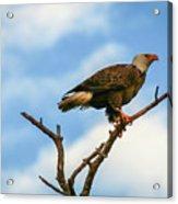 Eagle And Blue Sky Acrylic Print