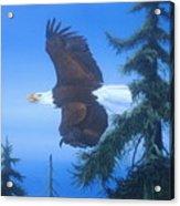 Eagle At Treetop Level Acrylic Print