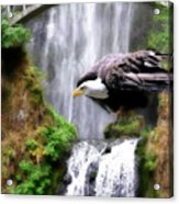 Eagle By The Waterfall Acrylic Print