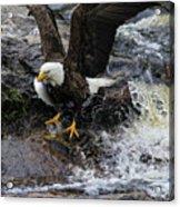 Eagle Catches Fish Acrylic Print