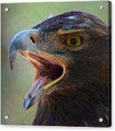 Eagle Cry Acrylic Print