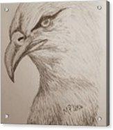 Eagle Drawing 1 Acrylic Print