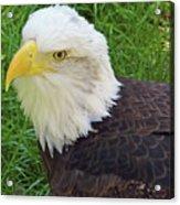 Eagle Eye Acrylic Print
