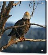 Eagle Eyed Acrylic Print