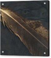 Eagle Feather   -006 Acrylic Print