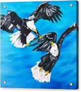 Eagle Fight Acrylic Print