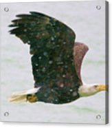 Eagle Flying In Snow Acrylic Print