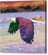 Eagle In Air Acrylic Print