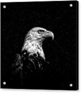 Eagle In Black And White Acrylic Print