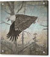 Eagle  In Forest Acrylic Print