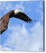 Eagle In The Clouds Acrylic Print