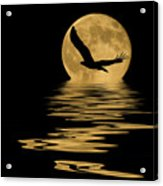 Eagle In The Moonlight Acrylic Print