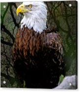 Eagle In The Night Acrylic Print