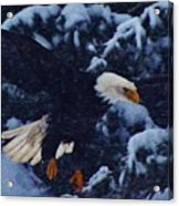 Eagle In The Storm Acrylic Print