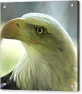 Eagle Majesty Acrylic Print