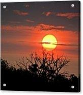 Eagle Nest Sunrise Acrylic Print