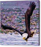 Eagle On A Mission Acrylic Print