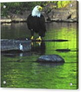 Eagle On River Rock IIi Acrylic Print