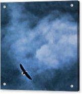 Eagle Over River And Shiloh Acrylic Print