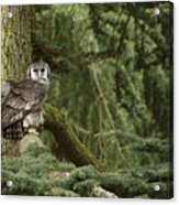 Eagle Owl In Forest Acrylic Print