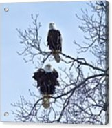 Eagle Pair Acrylic Print