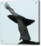 Eagle Park Acrylic Print