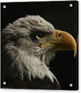 Eagle Profile 3 Acrylic Print