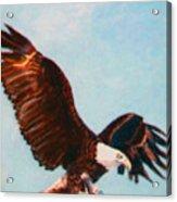 Eagle Ready for Flight Acrylic Print