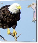 Eagle Reflection Acrylic Print