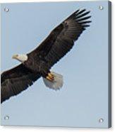 Eagle Soar Acrylic Print