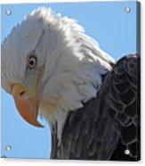 Eagle Stare Acrylic Print