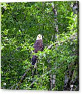 Eagle Watch Acrylic Print