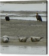 Eagles And Seals Acrylic Print