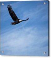 Eagles On The Fox - 3 Acrylic Print