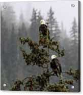Eagles On Watch 1 Acrylic Print