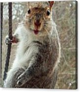 Earl The Squirrel Acrylic Print
