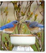 Early Bird Breakfast For Two Acrylic Print