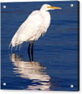 Early Bird Photograph Acrylic Print