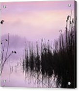 Early Morning By The Pond  Acrylic Print