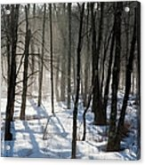 Early Morning Fog In A New Hampshire Forest Acrylic Print