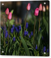 Early Morning Garden Acrylic Print