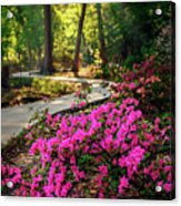 Early Morning In Honor Heights Park Acrylic Print