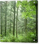 Early Morning In Swiss Forest Acrylic Print