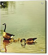 Early Morning Lessons Acrylic Print