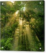 Early Morning Peace Acrylic Print