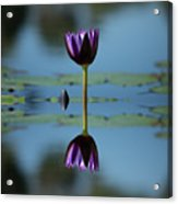 Early Morning Reflection Acrylic Print