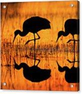 Early Morning Sandhill Cranes Acrylic Print