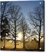 Early Morning Sunrise Through Trees And Fog Acrylic Print