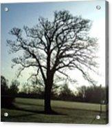 Early Morning Tree In Winter Acrylic Print