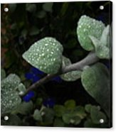 Early Morning Water Droplets Acrylic Print